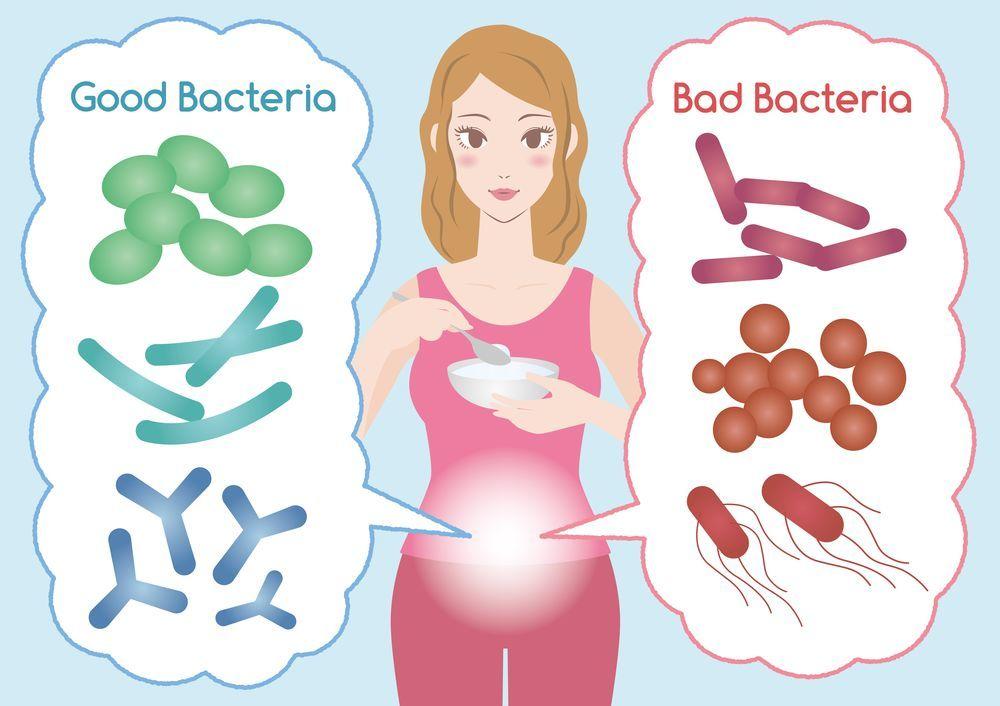 Пробиотики и пребиотики для кишечника. В чем разница? | Блог Medical Note о здоровье и цифровой медицине